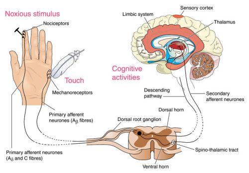 La douleur : un phénomène à la fois sensoriel, moteur et affectif. ©Peter Lamb/123RF